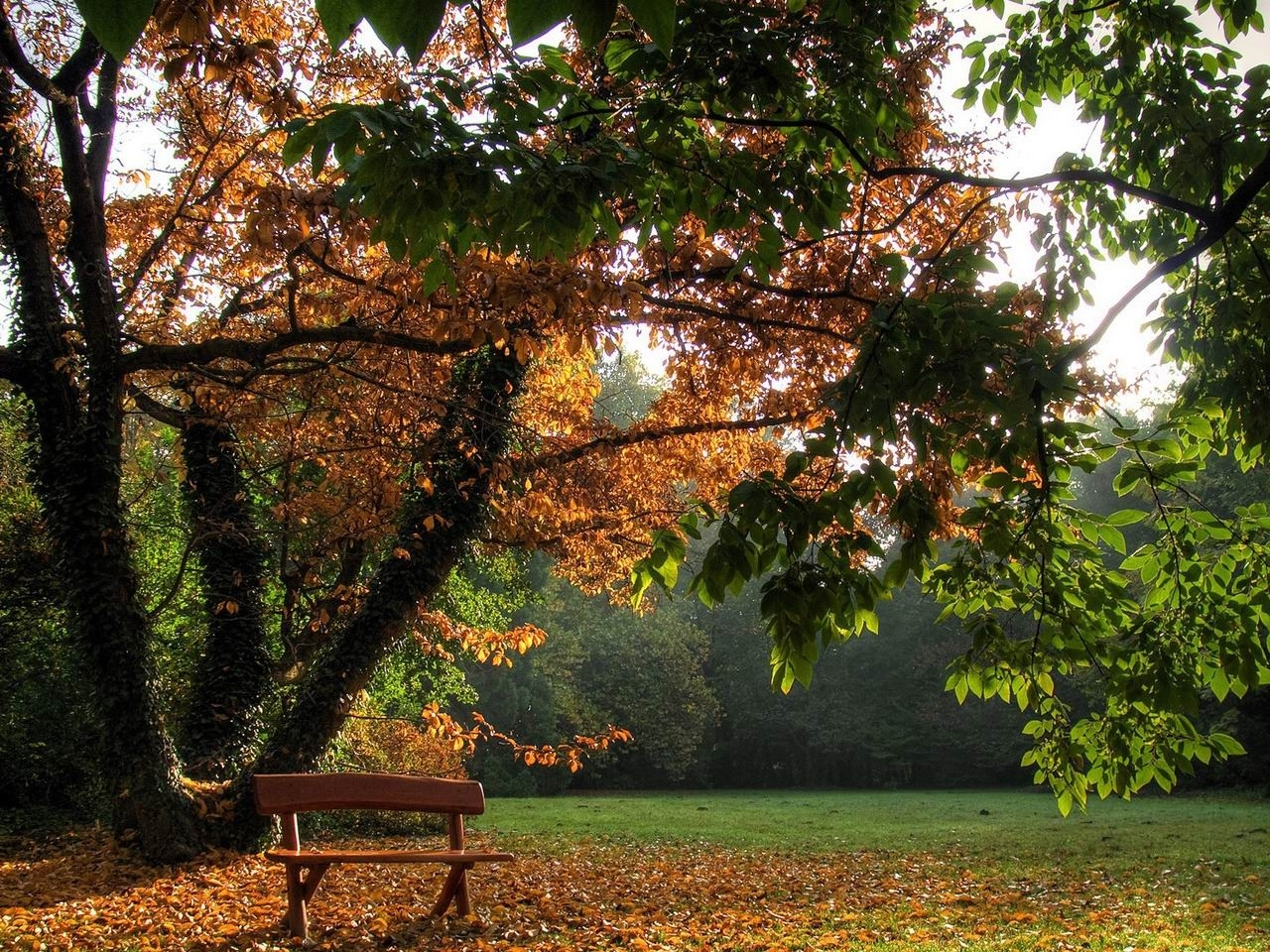 30642 download wallpaper Landscape, Trees, Autumn screensavers and pictures for free