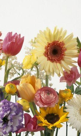41743 descargar fondo de pantalla Plantas, Flores: protectores de pantalla e imágenes gratis