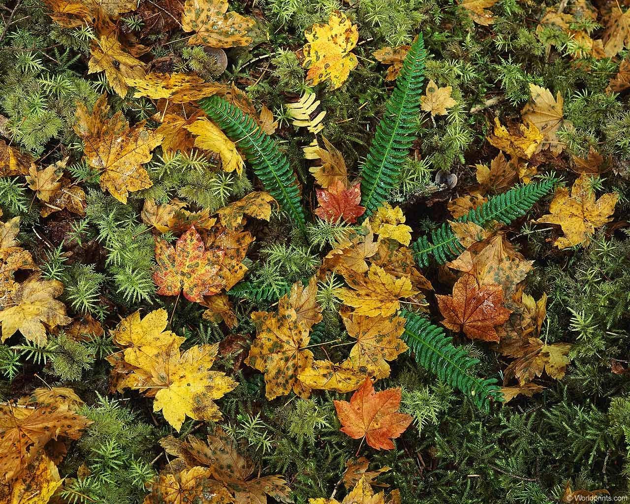 8765 скачать обои Растения, Фон, Листья, Папоротники - заставки и картинки бесплатно
