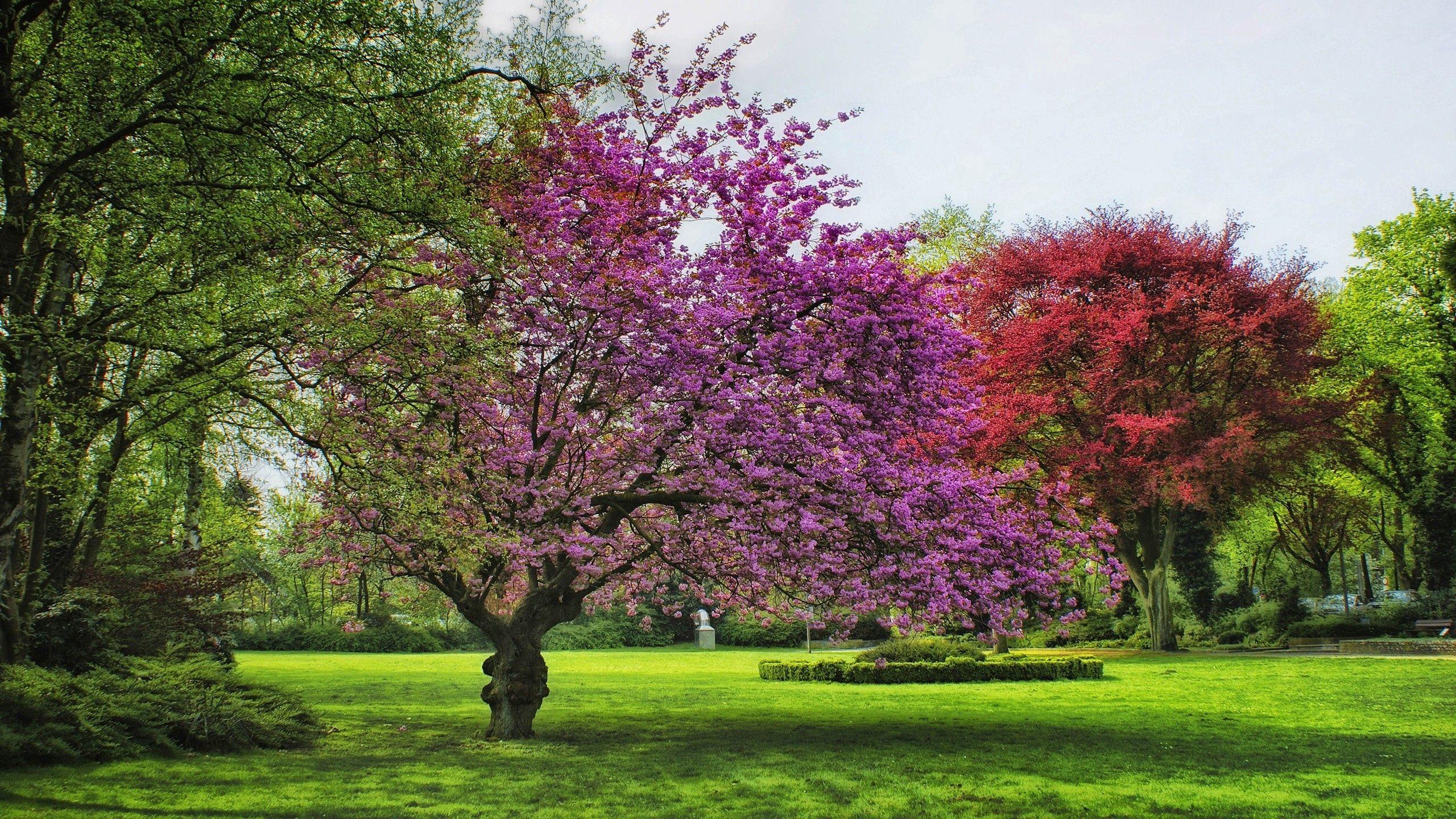 108329 скачать обои Цветение, Природа, Деревья, Трава, Лето - заставки и картинки бесплатно