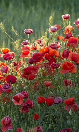 43351 télécharger le fond d'écran Plantes, Fleurs - économiseurs d'écran et images gratuitement