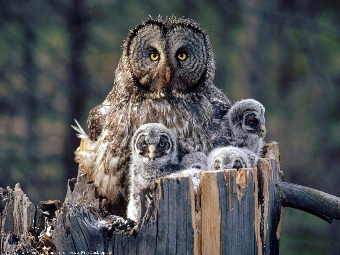 5405 download wallpaper Animals, Birds, Owl screensavers and pictures for free