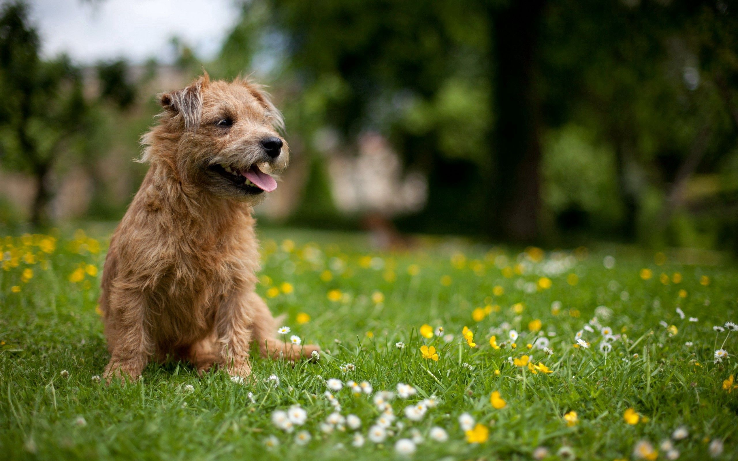130315 download wallpaper Animals, Dog, Grass, Polyana, Glade, Flowers screensavers and pictures for free