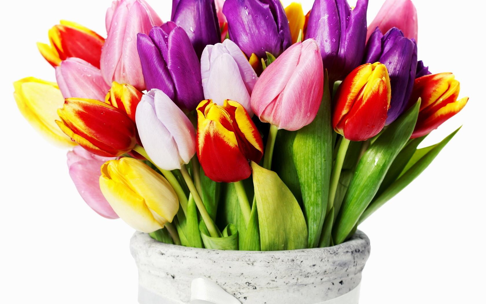 38651 скачать обои Растения, Цветы, Тюльпаны, Букеты - заставки и картинки бесплатно