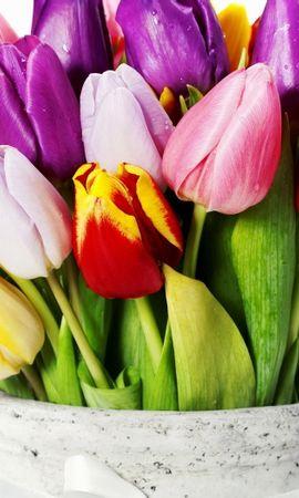 38651 descargar fondo de pantalla Plantas, Flores, Tulipanes, Bouquets: protectores de pantalla e imágenes gratis