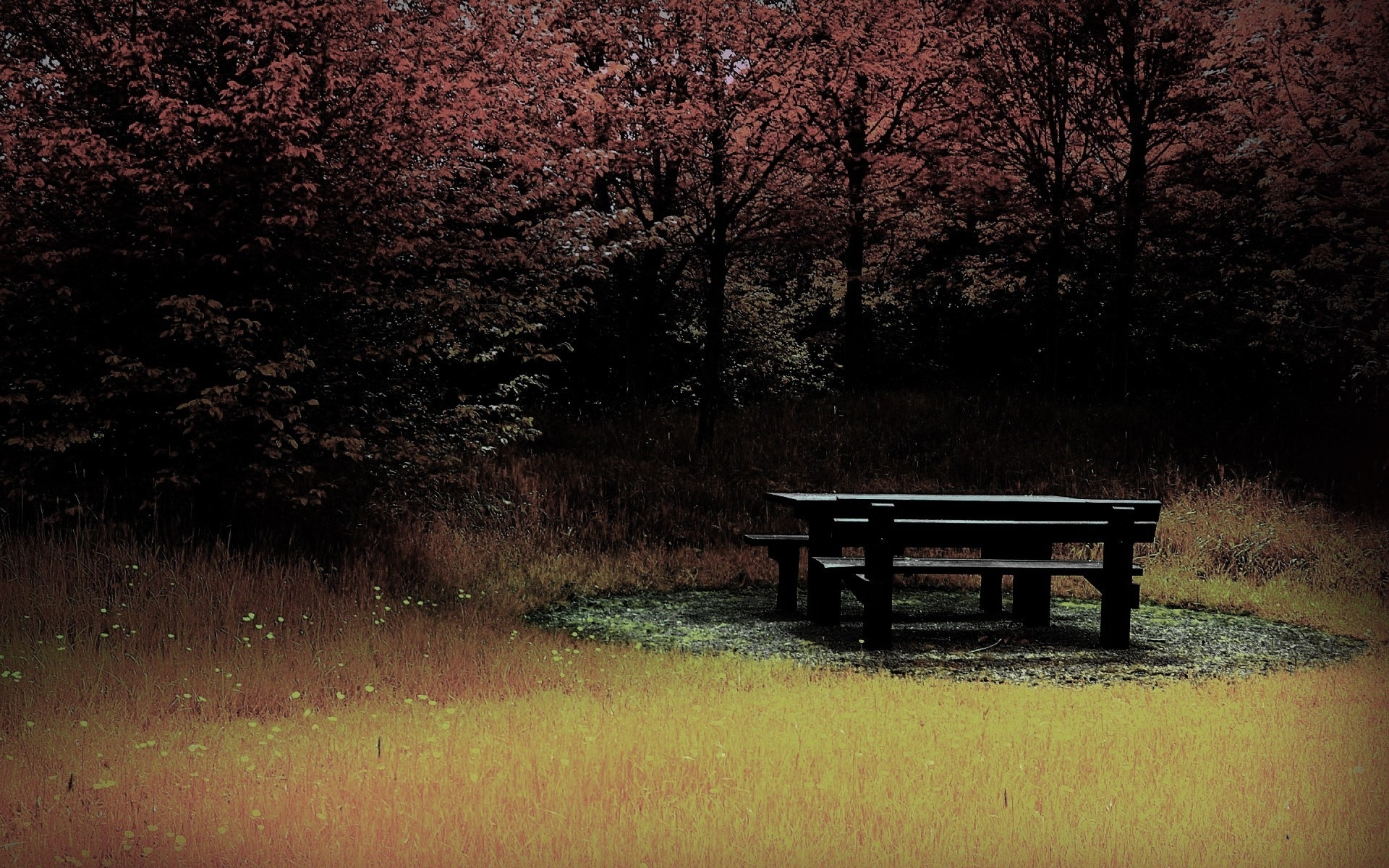 27617 download wallpaper Landscape, Trees, Grass, Autumn screensavers and pictures for free