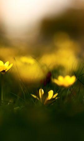 14930 скачать обои Растения, Цветы, Фон - заставки и картинки бесплатно