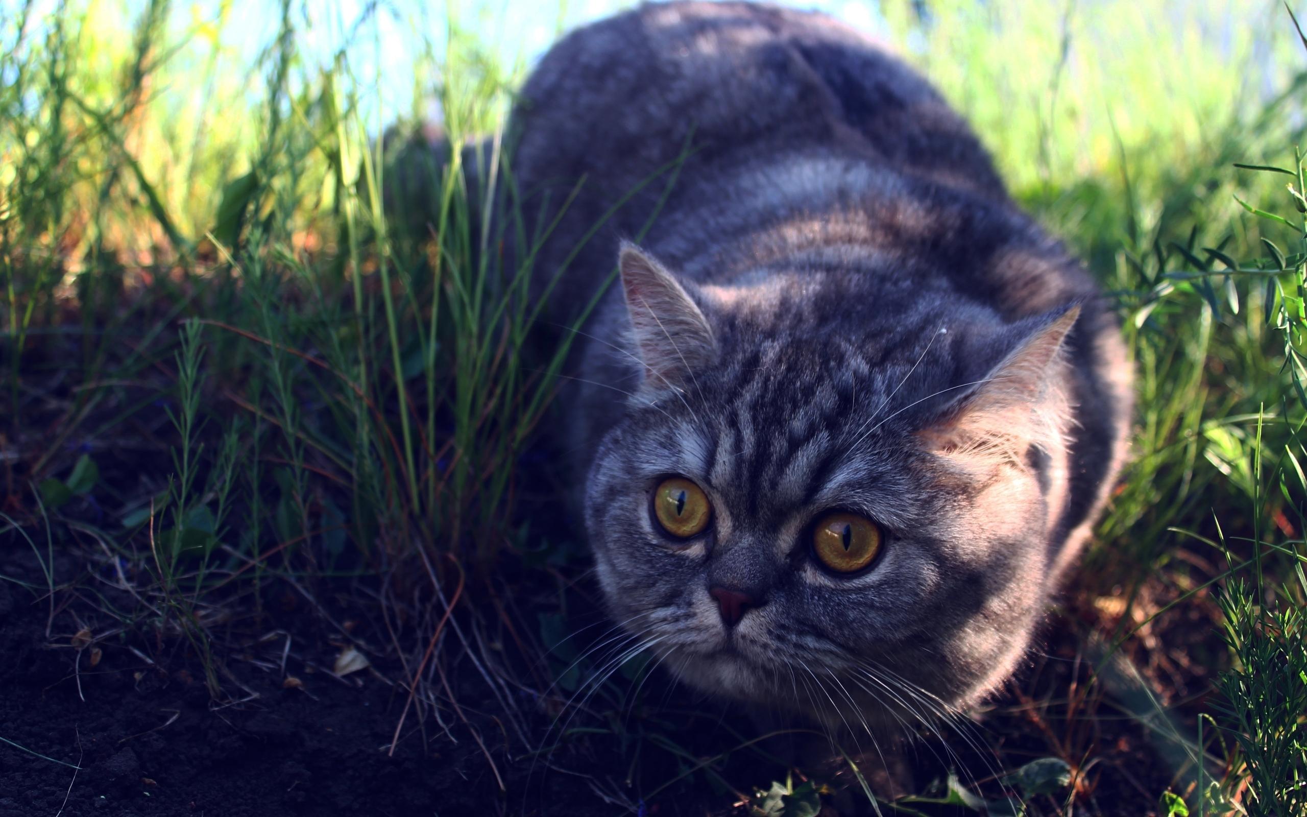 24876 скачать обои Животные, Кошки (Коты, Котики) - заставки и картинки бесплатно