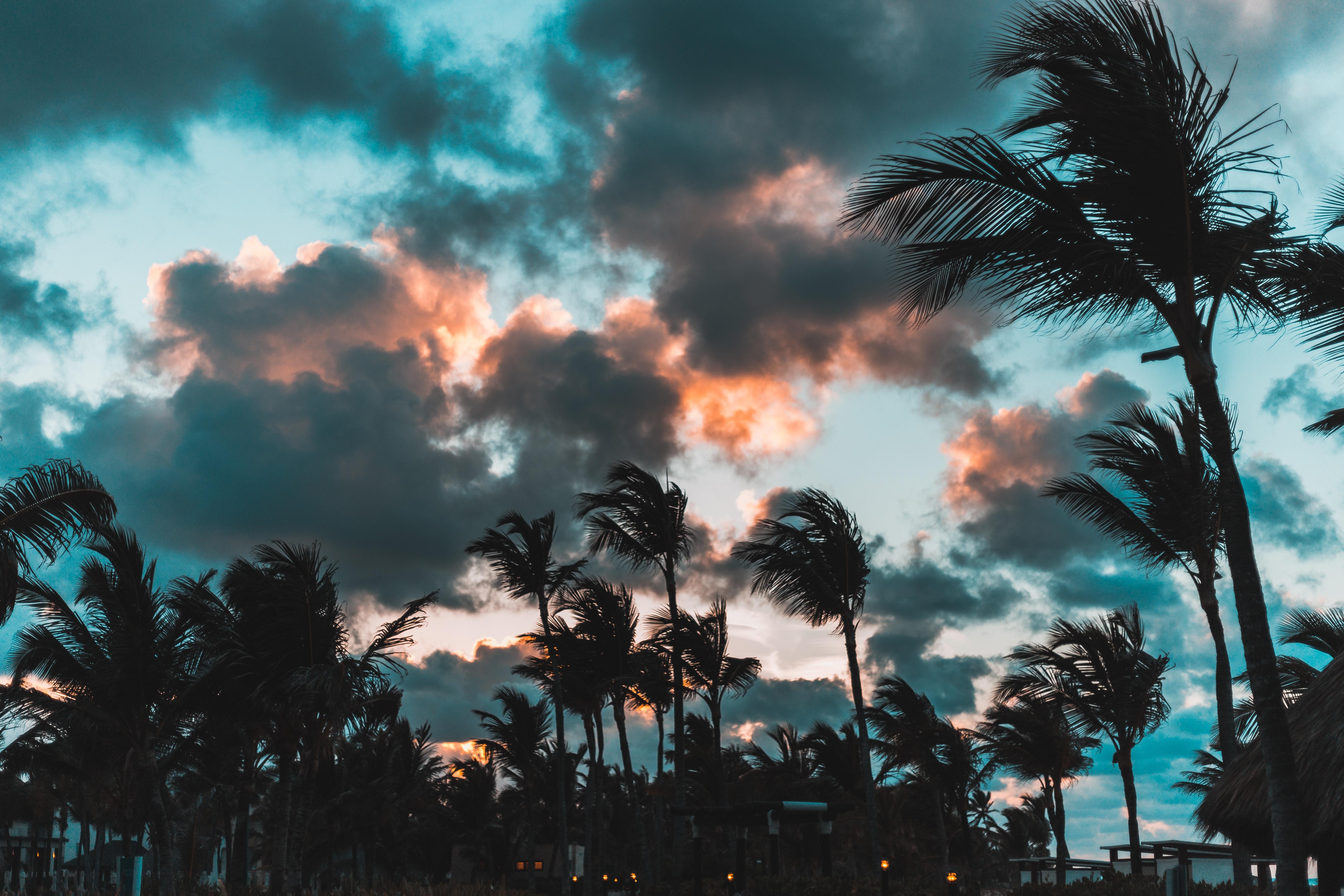 77459 免費下載壁紙 性质, 风, 云, 热带, 热带地区, 蓬塔卡纳, 多明尼加共和国, 多米尼加共和国, 棕榈 屏保和圖片