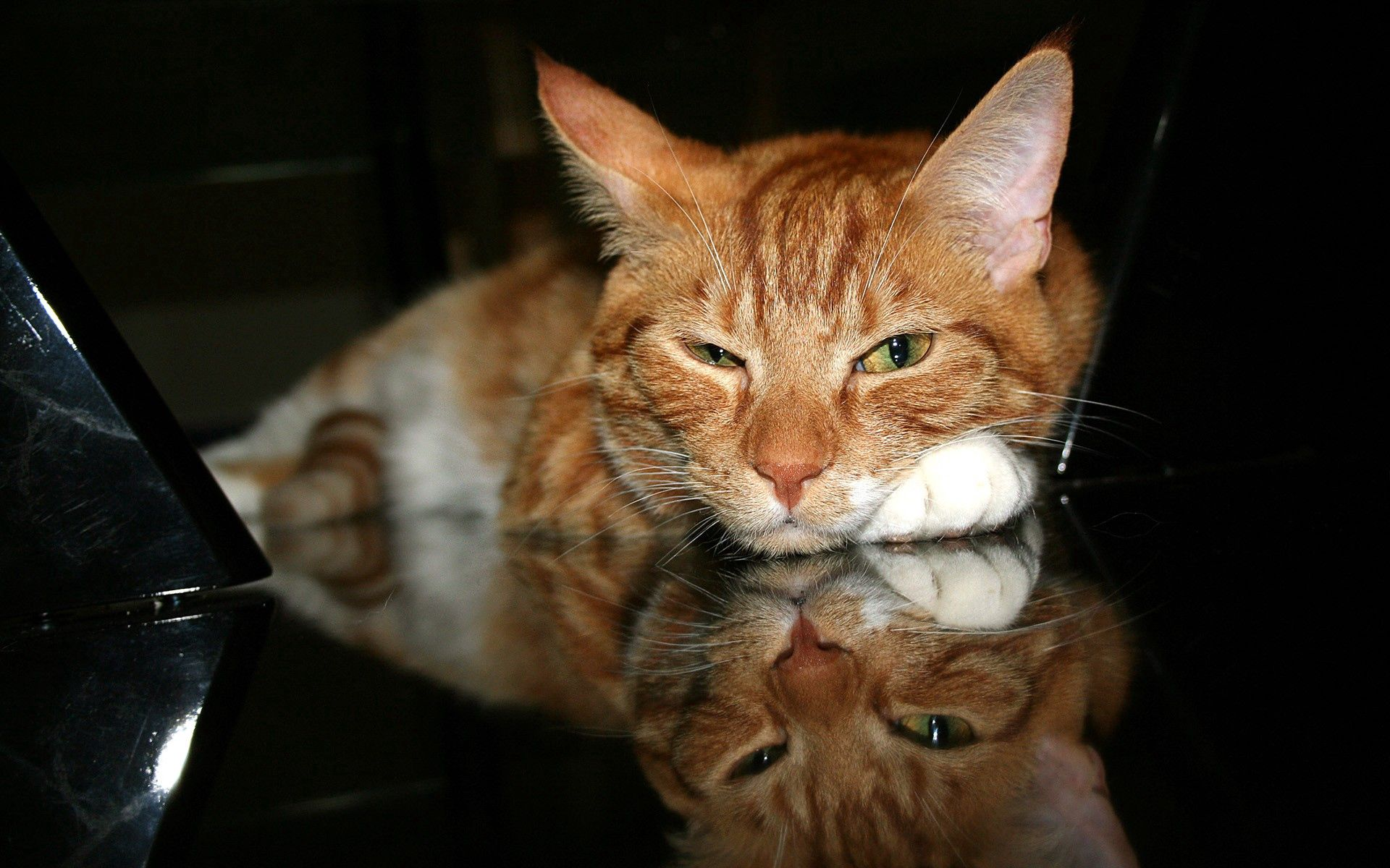 98384 download wallpaper Animals, Cat, Redhead, Muzzle, Tired, Paw screensavers and pictures for free