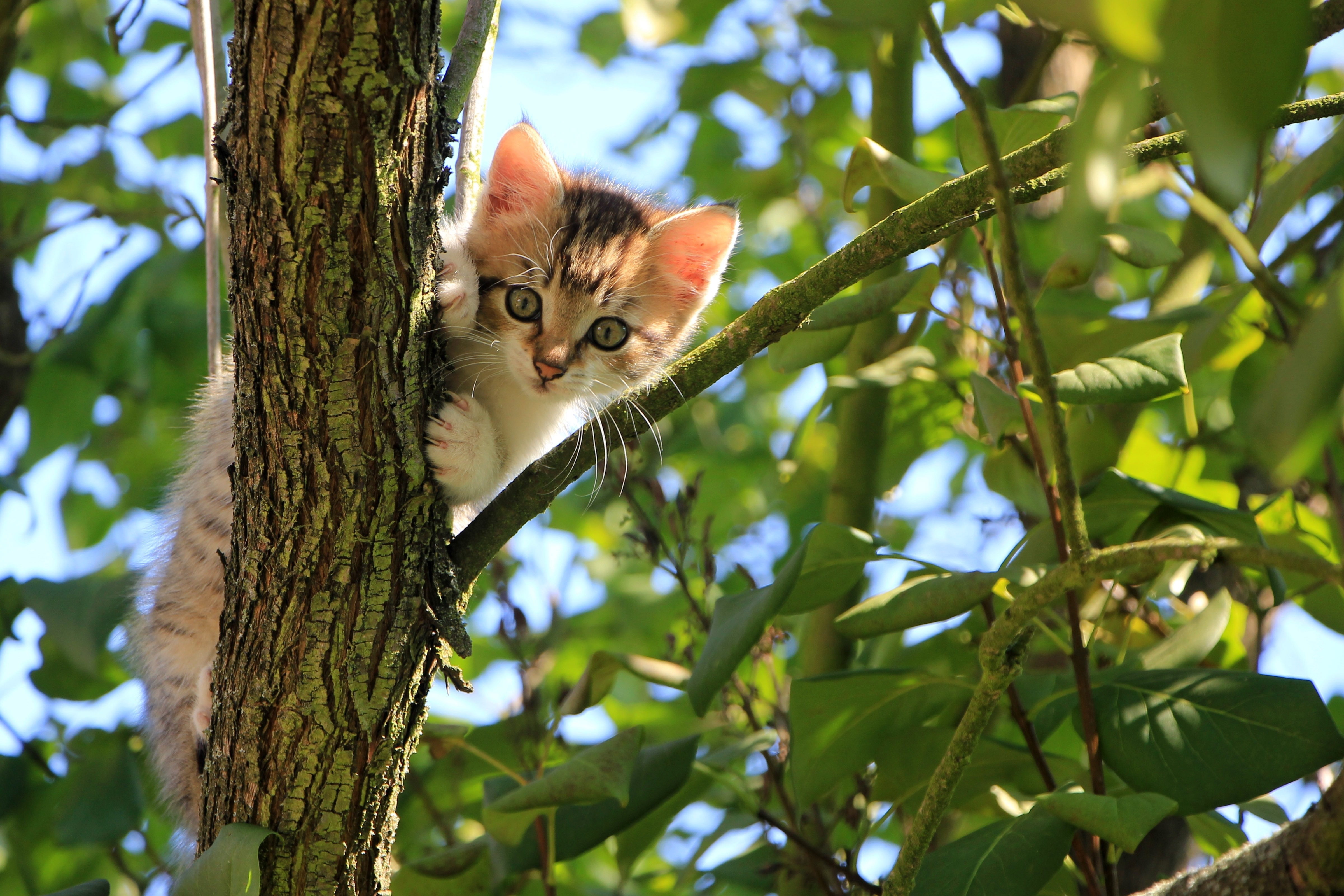 74198 Screensavers and Wallpapers Kitten for phone. Download Sweetheart, Animals, Funny, Wood, Cat, Kitty, Kitten, Tree, Nice pictures for free