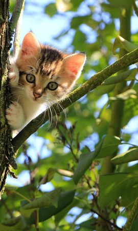 74198 download wallpaper Animals, Kitty, Kitten, Cat, Wood, Tree, Nice, Sweetheart, Funny screensavers and pictures for free