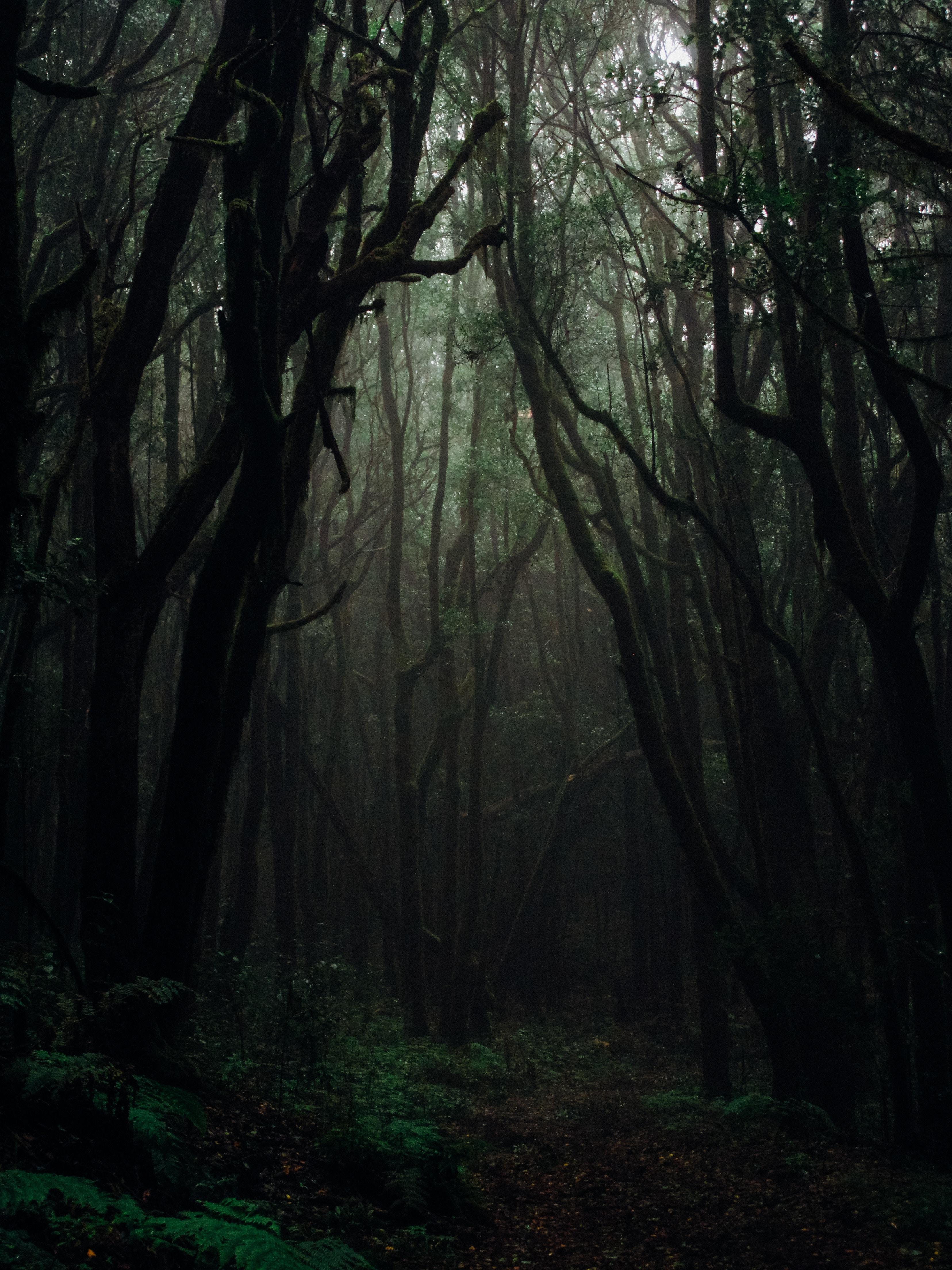 145053 Hintergrundbild herunterladen Dunkel, Natur, Bäume, Herbst, Wald, Nebel, Geäst, Zweige, Düster, Düsteren - Bildschirmschoner und Bilder kostenlos