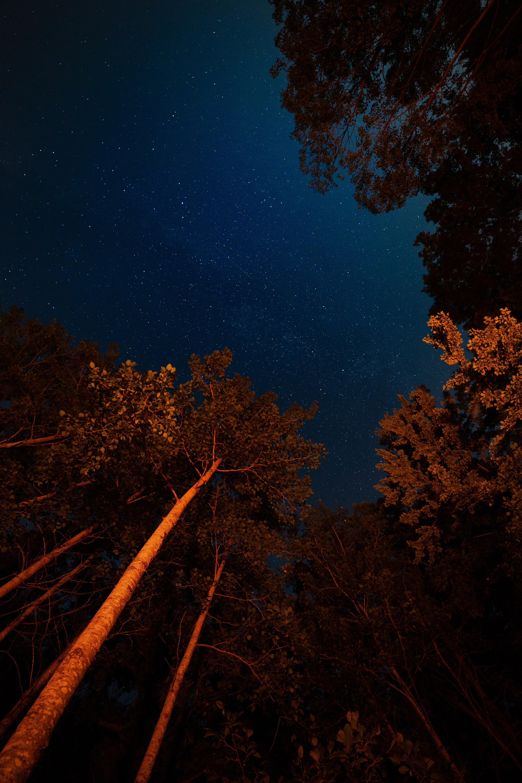 95510 скачать обои Темные, Ночь, Деревья, Звездное Небо, Темный, Кроны - заставки и картинки бесплатно