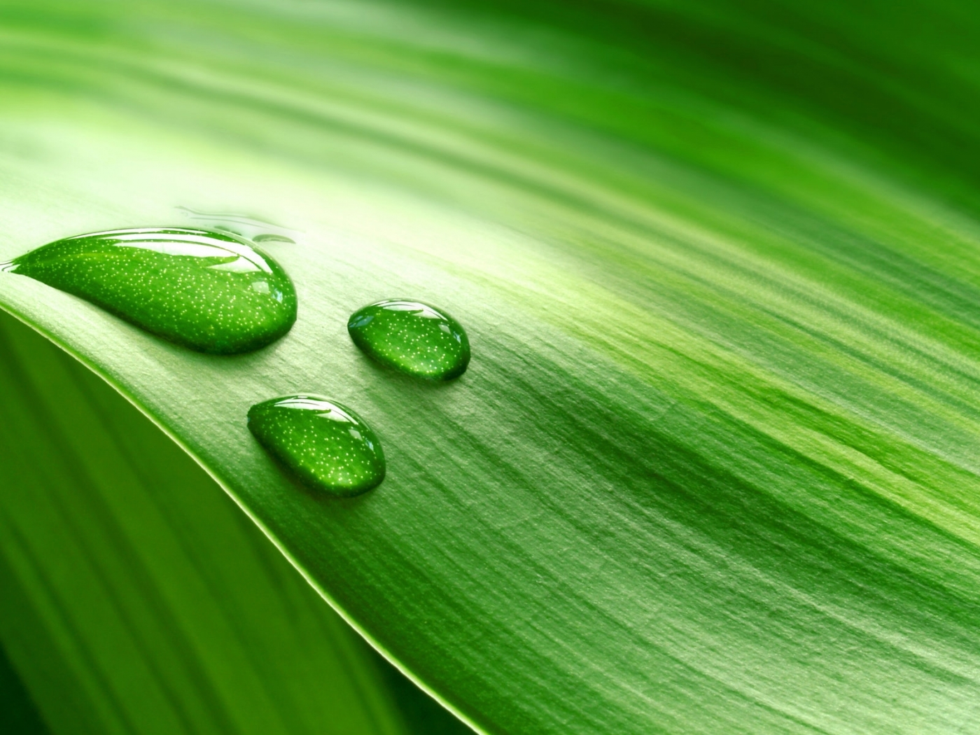 29412 download wallpaper Background, Leaves, Drops screensavers and pictures for free