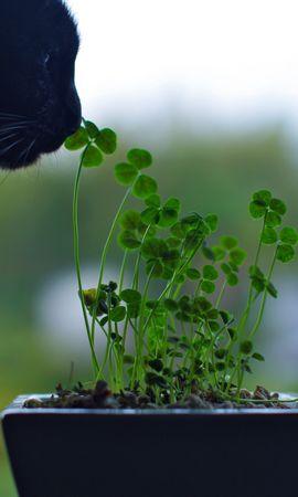 43293 descargar fondo de pantalla Animales, Plantas, Gatos: protectores de pantalla e imágenes gratis
