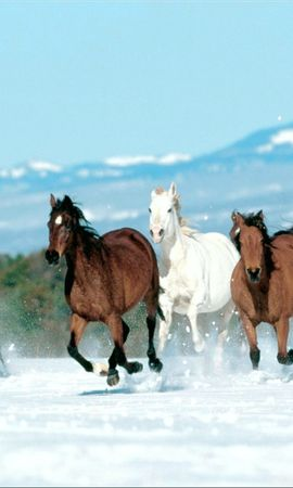 2535 download wallpaper Animals, Winter, Horses screensavers and pictures for free