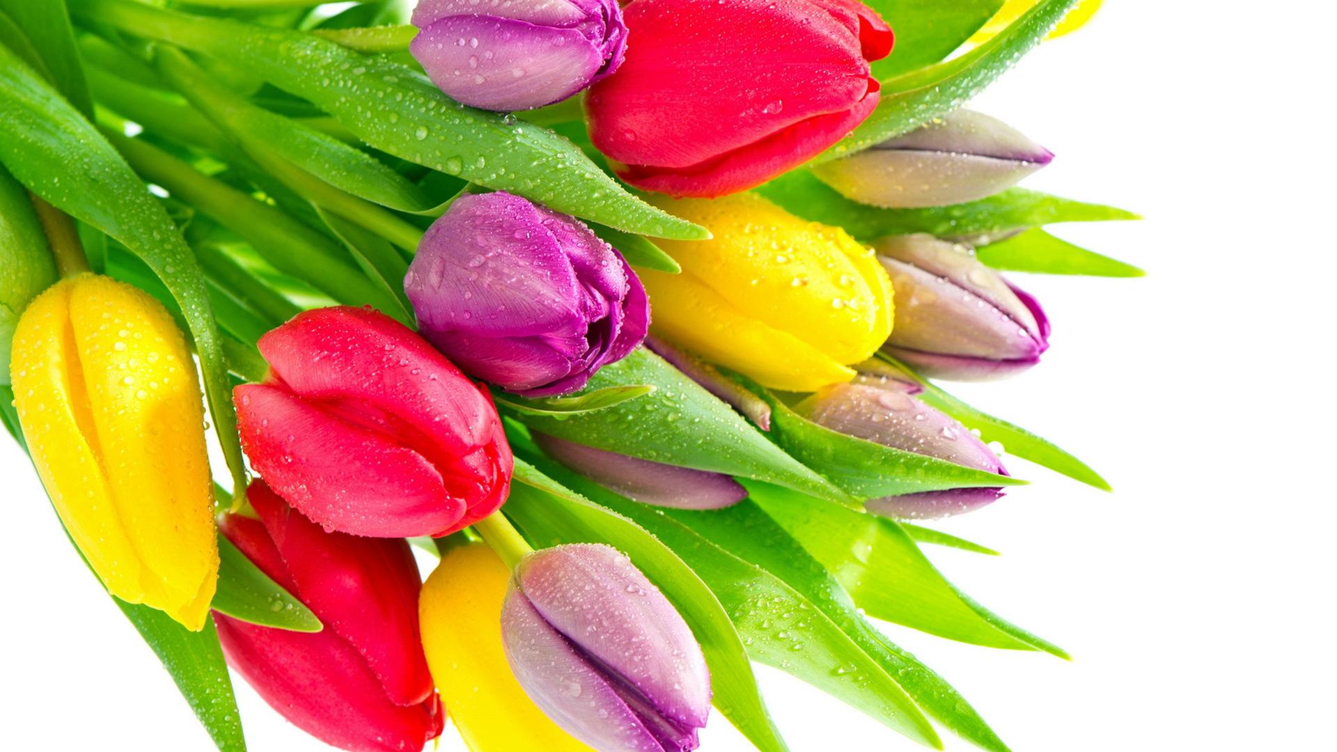 38180 Hintergrundbild herunterladen Pflanzen, Blumen, Tulpen - Bildschirmschoner und Bilder kostenlos
