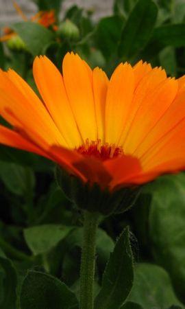 5379 скачать обои Растения, Цветы - заставки и картинки бесплатно