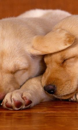 6659 download wallpaper Animals, Dogs screensavers and pictures for free