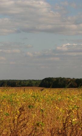 3323 скачать обои Пейзаж, Трава, Поля, Небо - заставки и картинки бесплатно