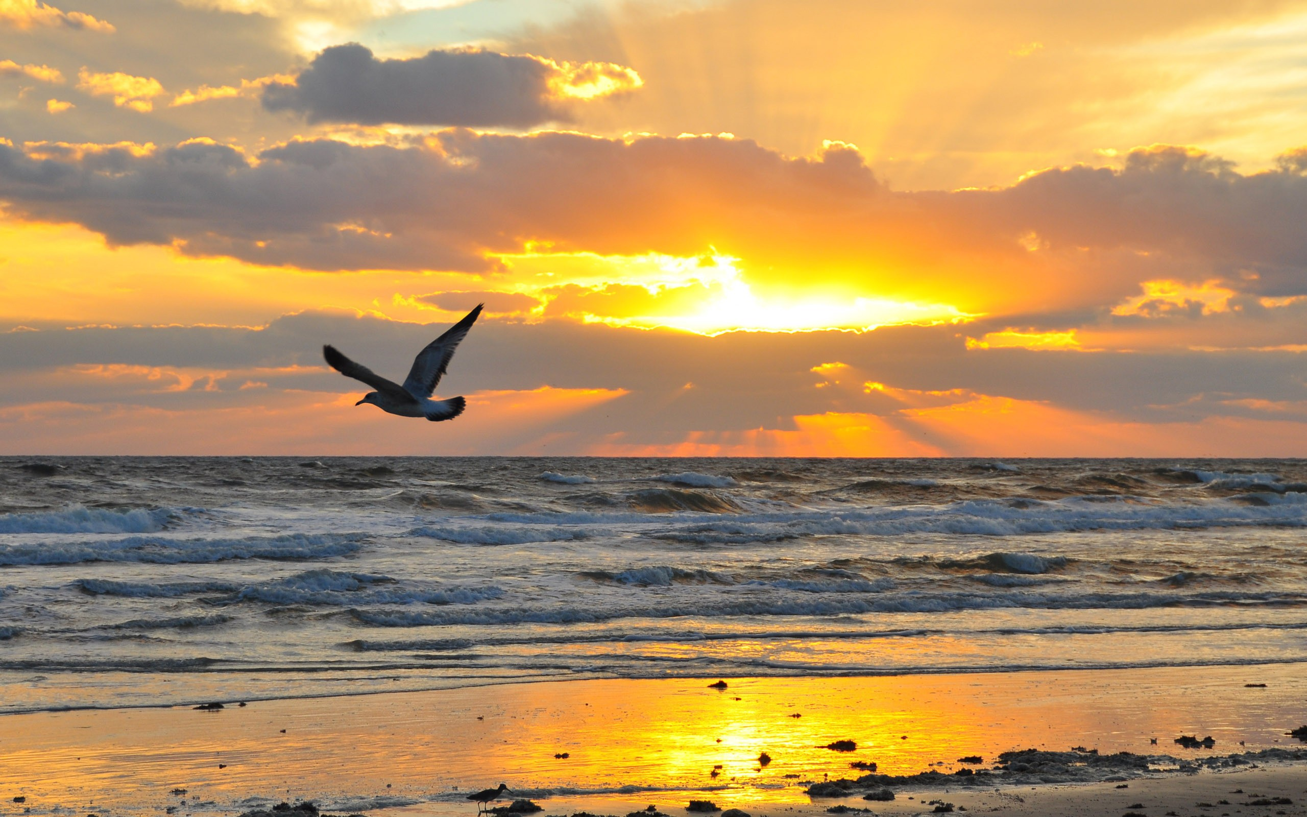 32919 download wallpaper Landscape, Sunset, Sea, Seagulls screensavers and pictures for free