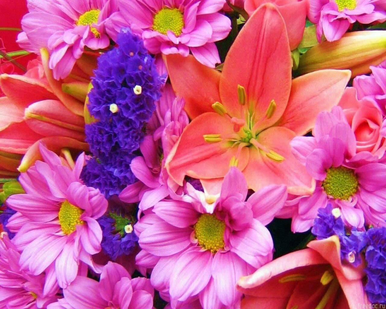 20678 скачать обои Растения, Цветы - заставки и картинки бесплатно