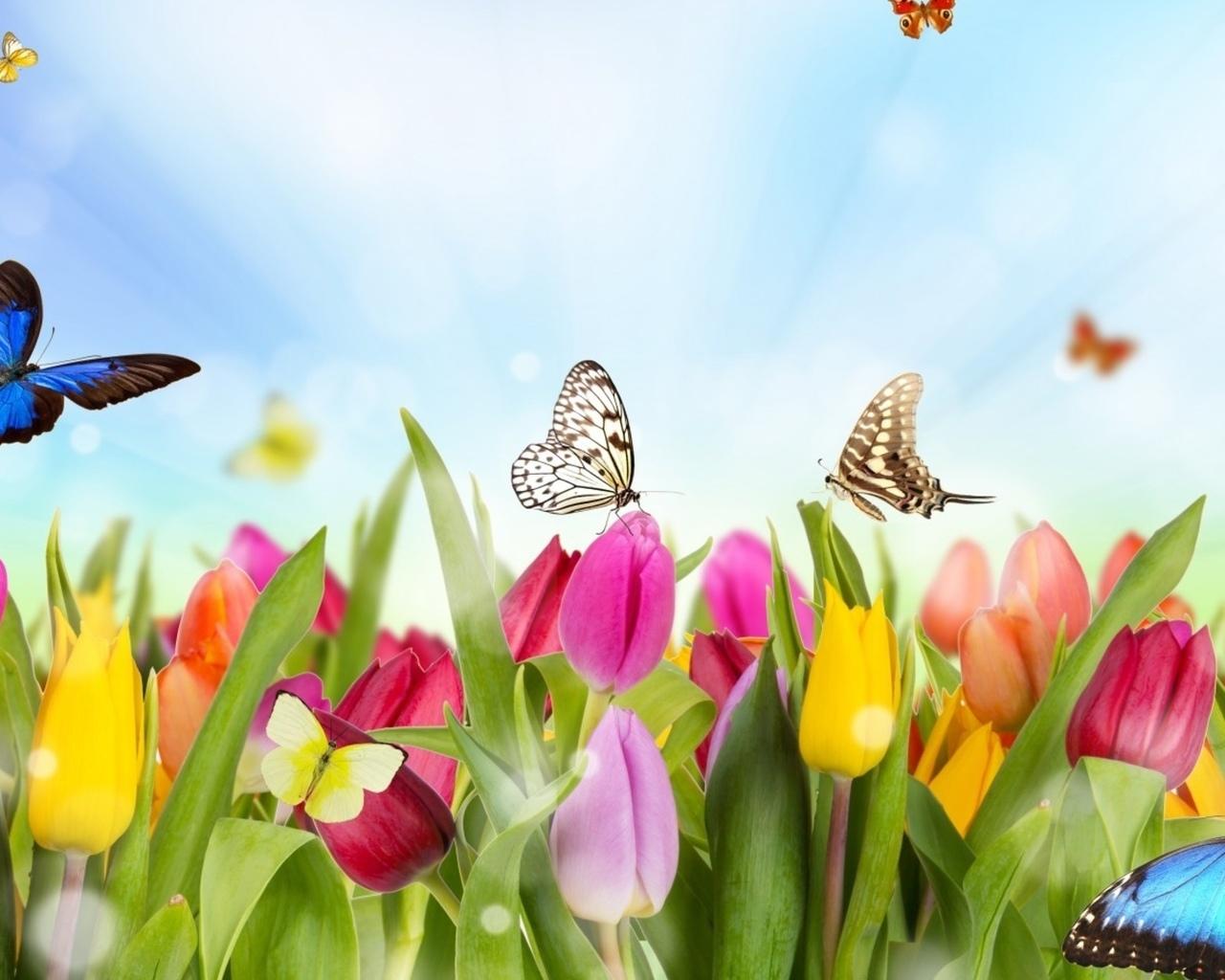 16372 скачать обои Растения, Бабочки, Цветы, Тюльпаны - заставки и картинки бесплатно