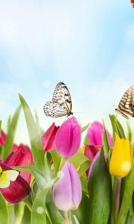 16372 descargar fondo de pantalla Plantas, Mariposas, Flores, Tulipanes: protectores de pantalla e imágenes gratis