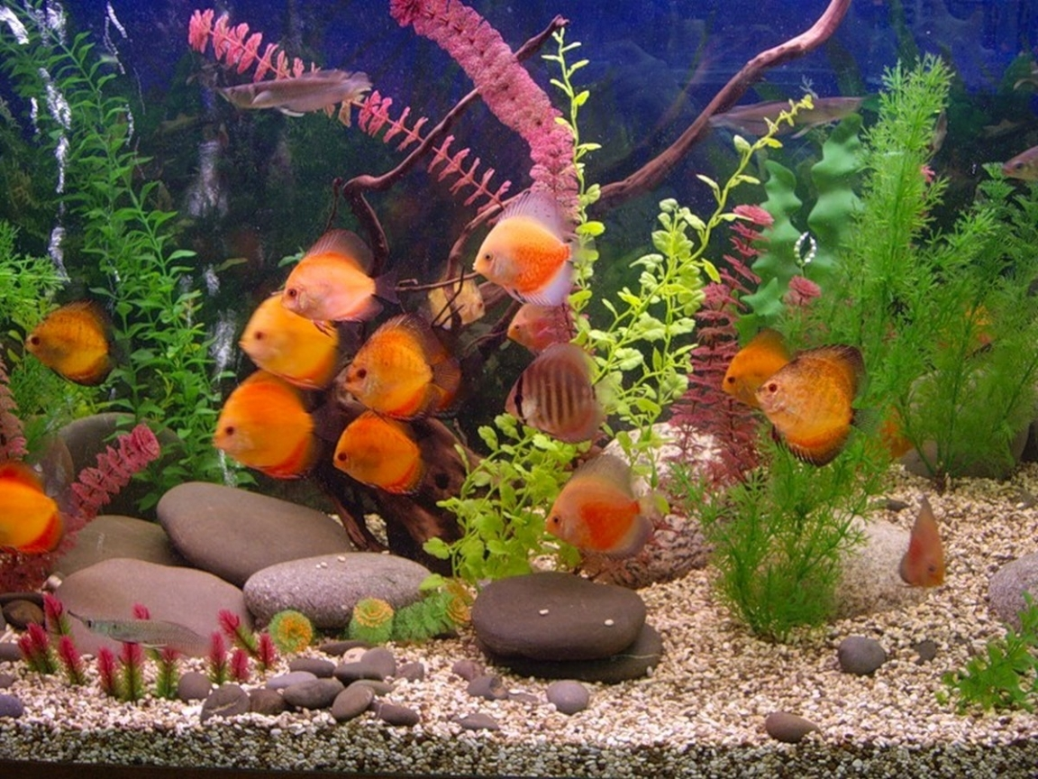 41787 download wallpaper Landscape, Aquariums, Fishes screensavers and pictures for free