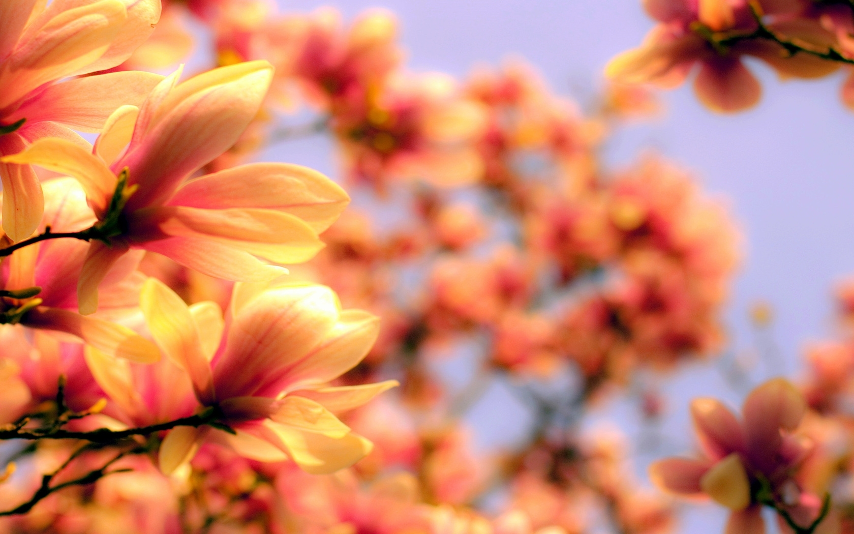 41605 download wallpaper Landscape, Flowers, Background screensavers and pictures for free