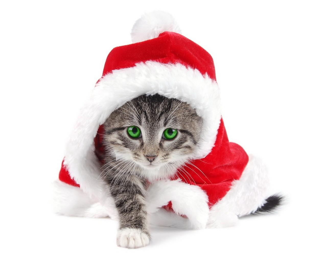 10901 descargar fondo de pantalla Vacaciones, Animales, Gatos, Año Nuevo, Navidad: protectores de pantalla e imágenes gratis