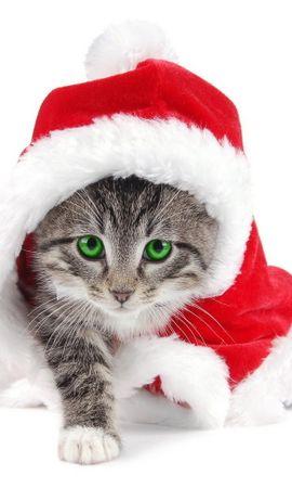 10901 télécharger le fond d'écran Fêtes, Animaux, Chats, Nouvelle Année, Noël - économiseurs d'écran et images gratuitement