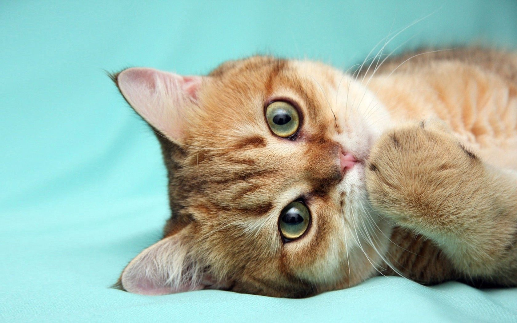 107834 download wallpaper Animals, Cat, Redhead, Paw screensavers and pictures for free