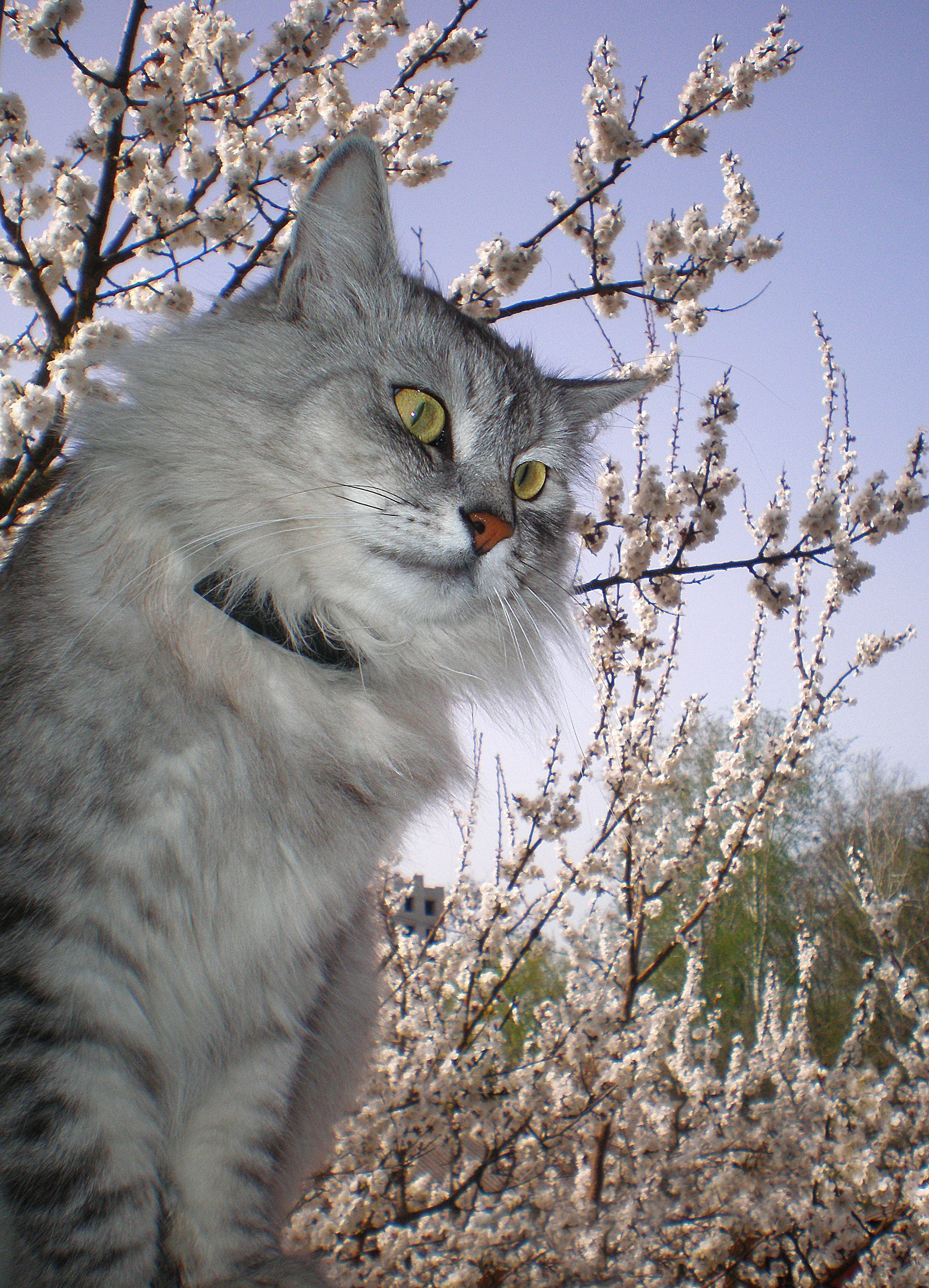 19337 download wallpaper Cats, Animals screensavers and pictures for free