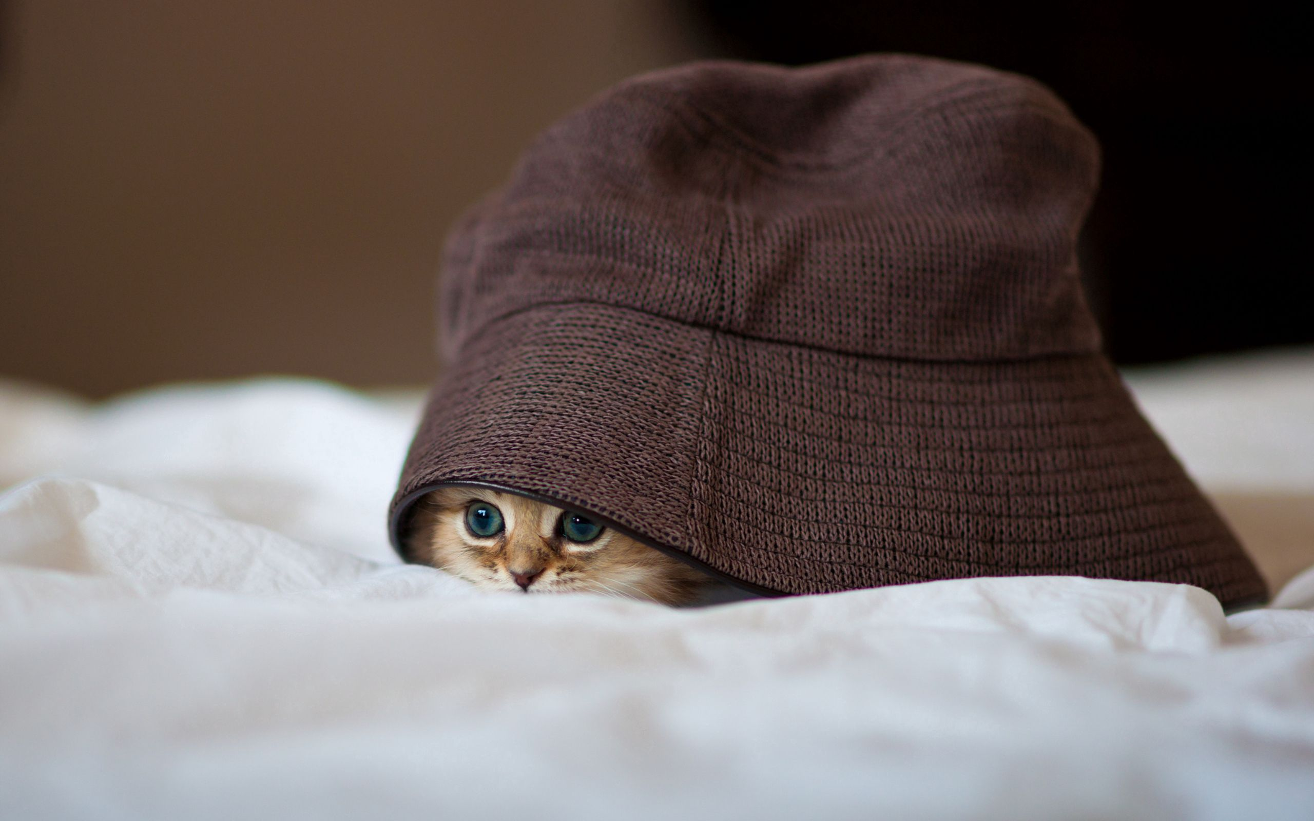 77418 download wallpaper Animals, Kitty, Kitten, Hat, Peek Out, Look Out, Hide screensavers and pictures for free