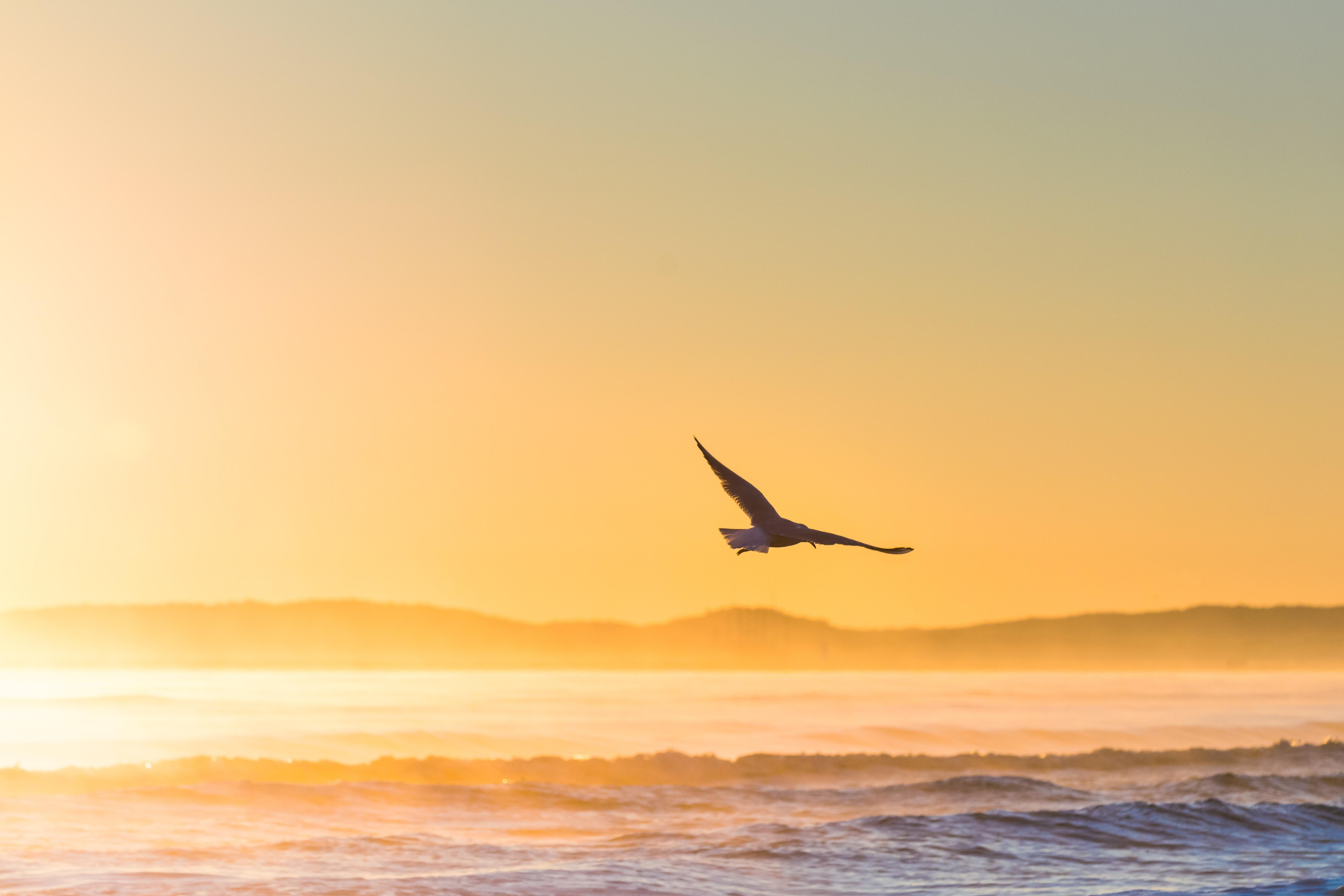 67998 fond d'écran 720x1520 sur votre téléphone gratuitement, téléchargez des images Animaux, Coucher De Soleil, Mer, Oiseau, Brouillard, Domaine, Champ, Mouette 720x1520 sur votre mobile