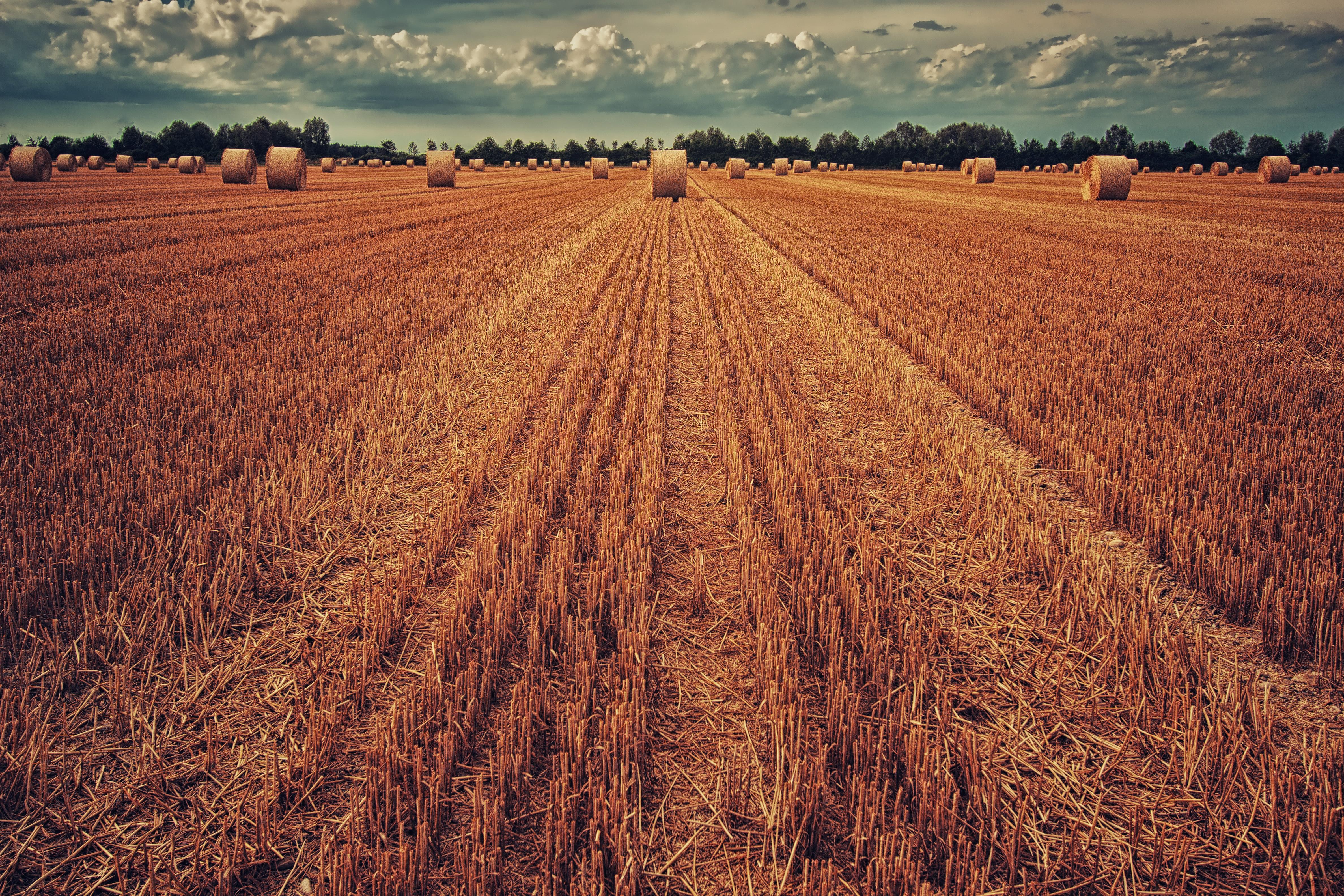 123593 скачать обои Природа, Поле, Урожай, Сено, Трава, Пшеница - заставки и картинки бесплатно