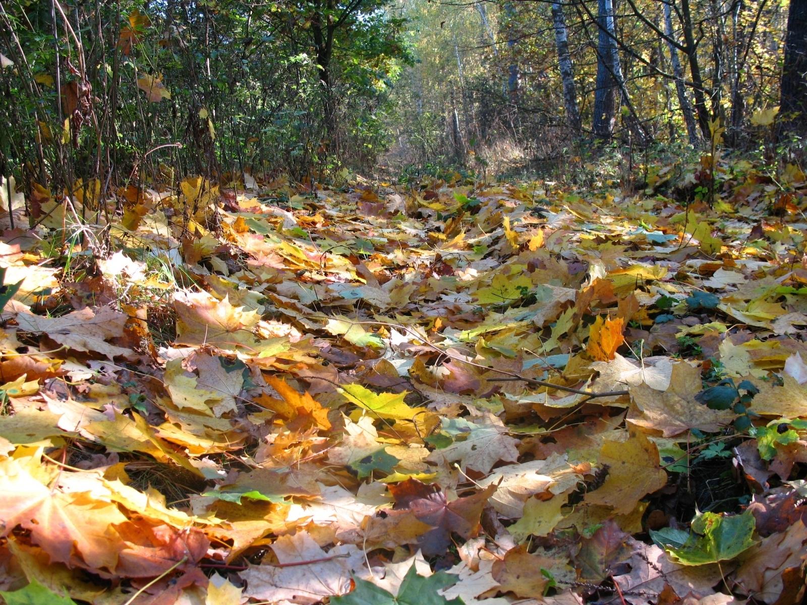 5781 скачать обои Растения, Пейзаж, Осень, Листья - заставки и картинки бесплатно