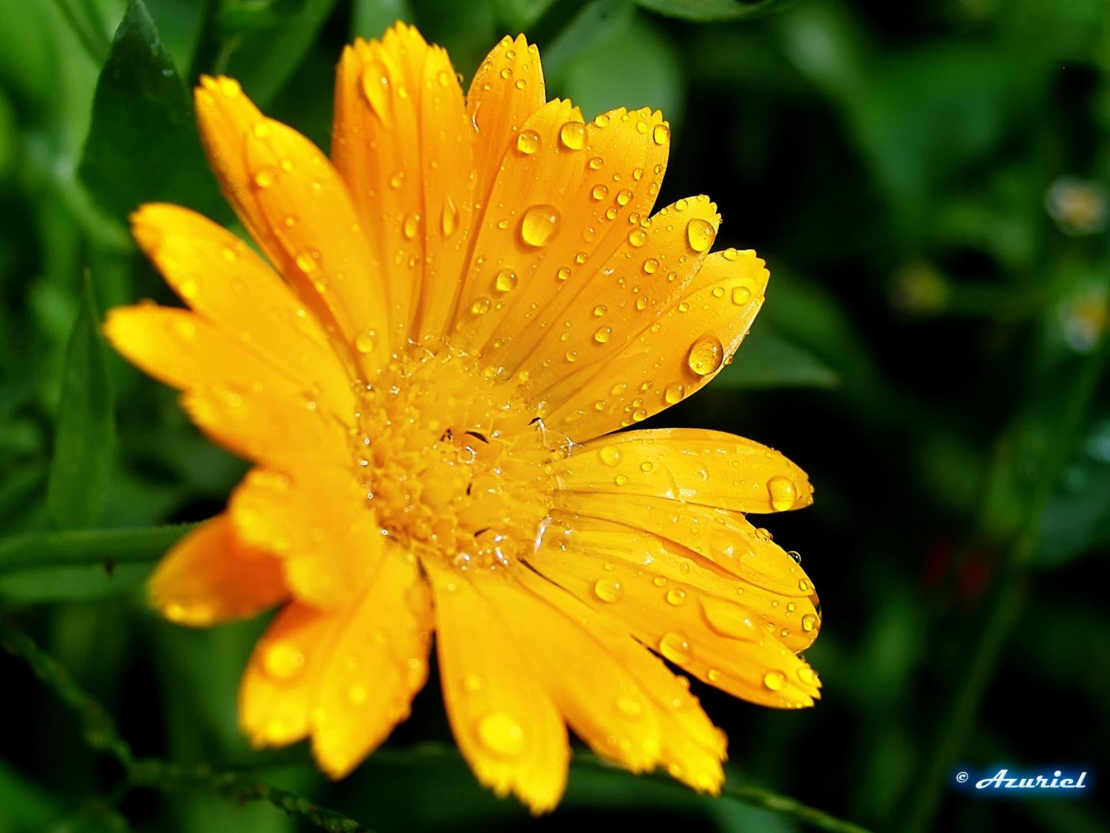 3300 скачать обои Растения, Цветы - заставки и картинки бесплатно