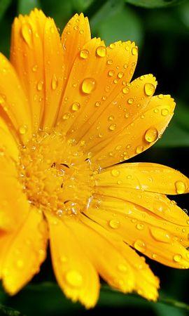 3300 descargar fondo de pantalla Plantas, Flores: protectores de pantalla e imágenes gratis