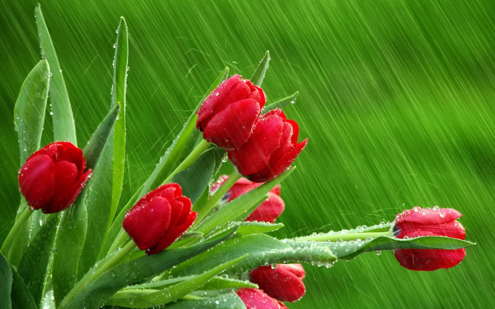 Скачать картинку Растения, Цветы, Тюльпаны в телефон бесплатно.