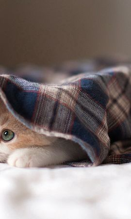 125446 download wallpaper Animals, Cat, To Lie Down, Lie, Kitty, Kitten, Playful screensavers and pictures for free