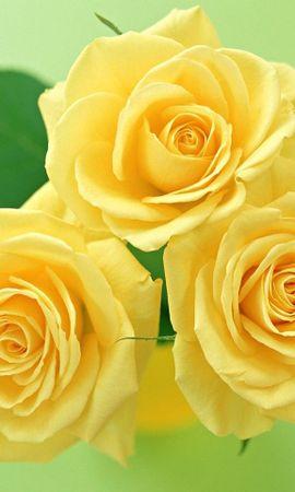 3449 descargar fondo de pantalla Plantas, Flores, Roses, Postales: protectores de pantalla e imágenes gratis