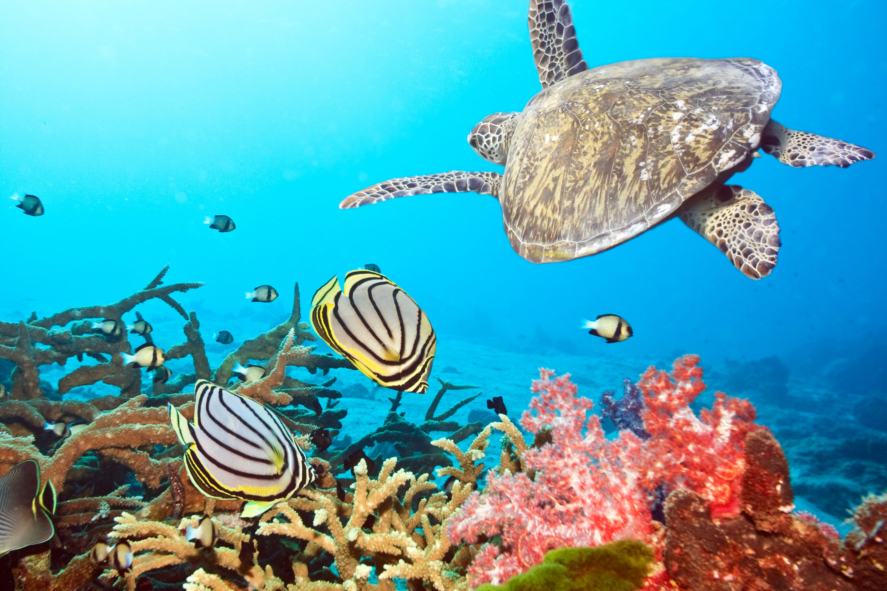 49300 download wallpaper Landscape, Turtles, Sea, Fishes screensavers and pictures for free