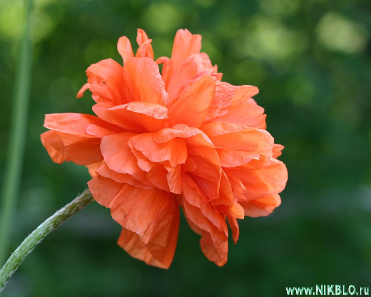 Скачать картинку Цветы, Растения в телефон бесплатно.