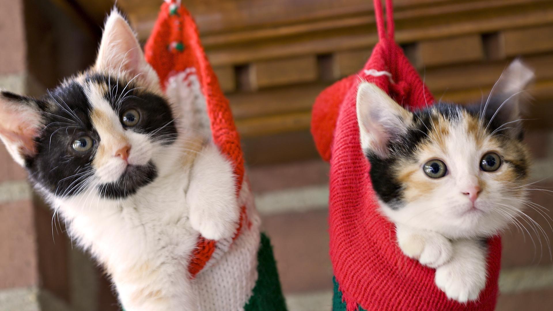 23768 скачать обои Животные, Кошки (Коты, Котики) - заставки и картинки бесплатно