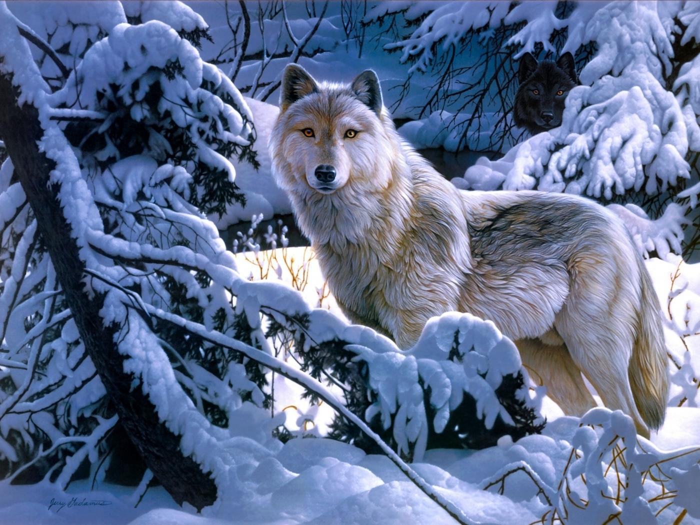 45911 descargar fondo de pantalla Animales, Lobos, Imágenes: protectores de pantalla e imágenes gratis