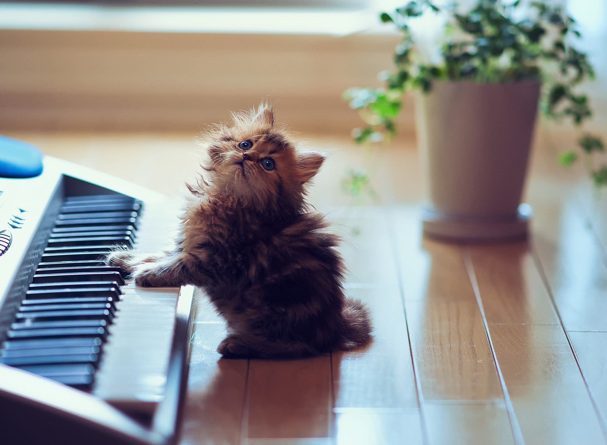 51104 download wallpaper Animals, Sit, Fluffy, Kitty, Kitten, Playful, Synthesizer, Keys, Floor screensavers and pictures for free