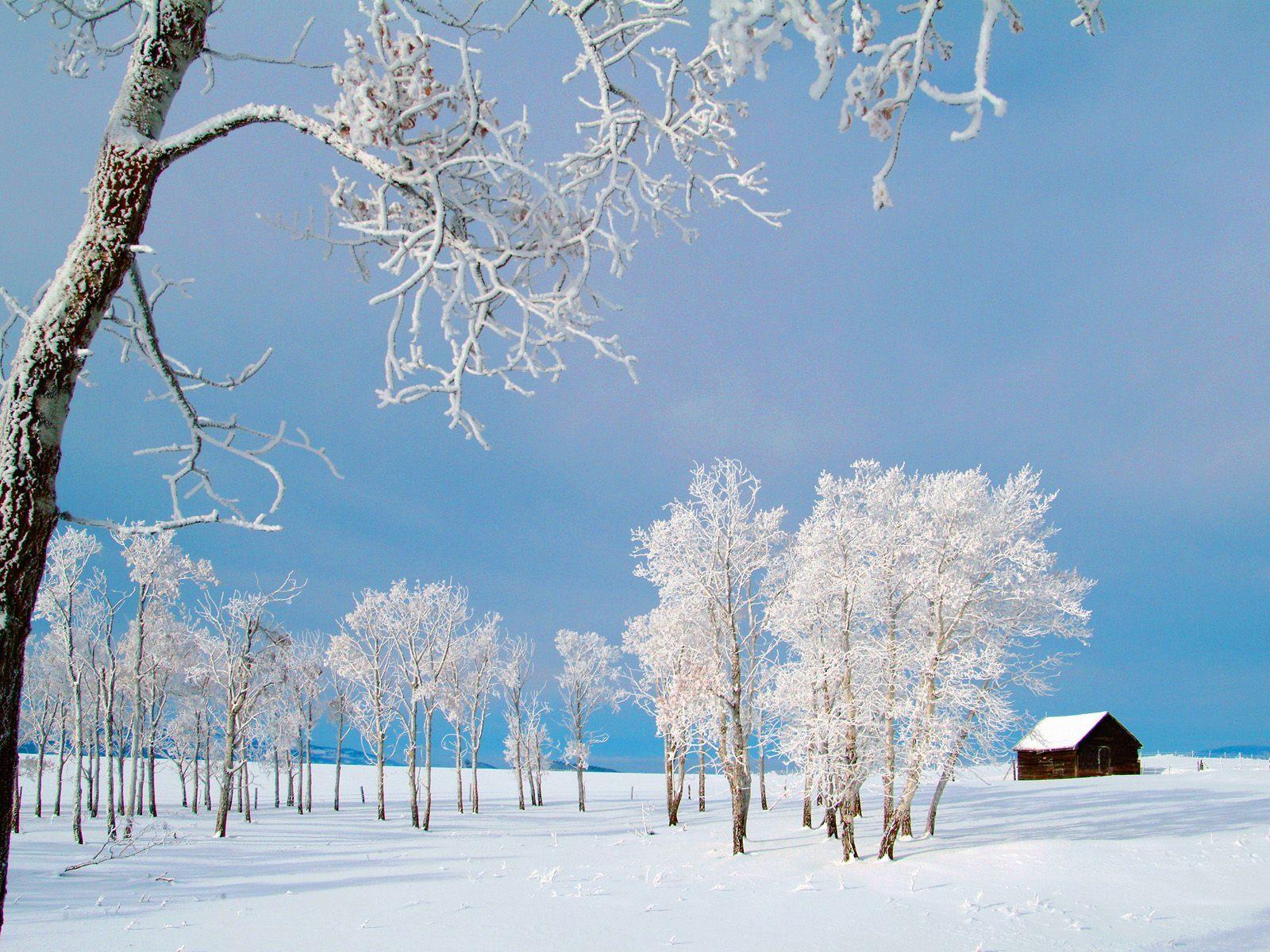 12111 скачать обои Пейзаж, Зима, Деревья - заставки и картинки бесплатно